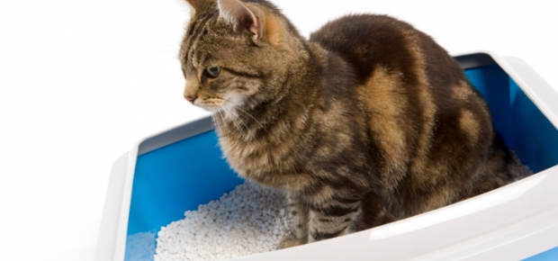 Антибиотик при цистите у котов