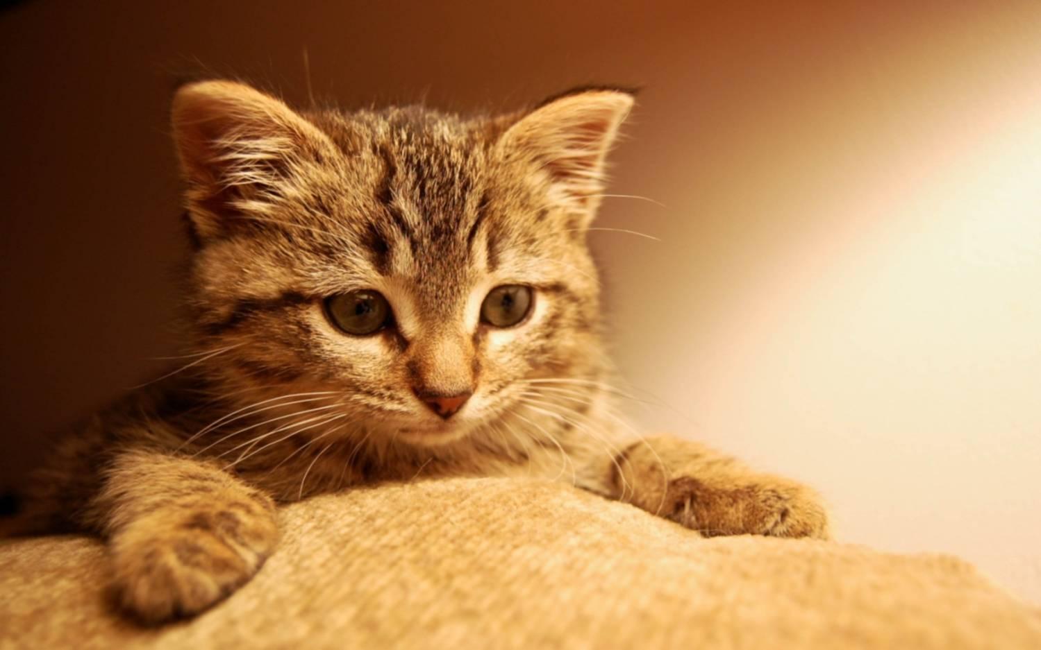 Зачем коты топчутся в меня