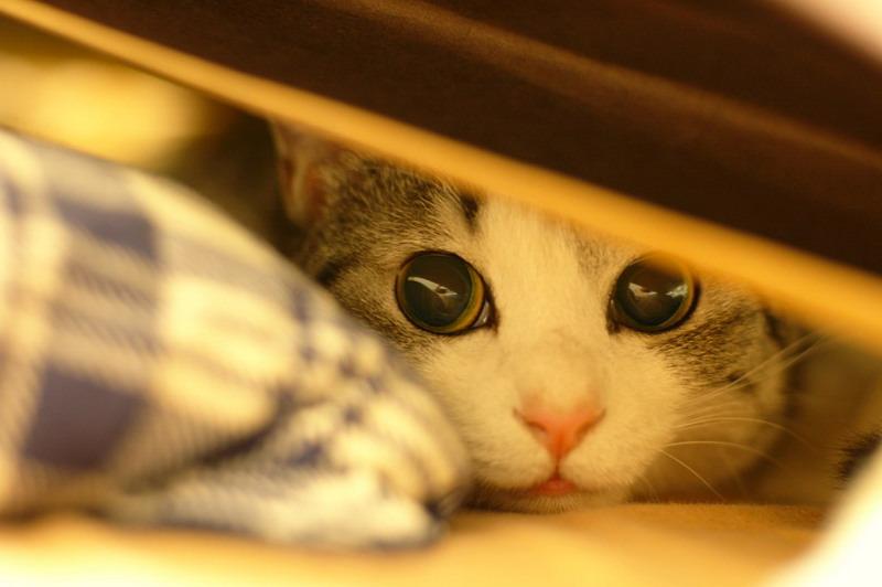 Кот ослеп большие зрачки