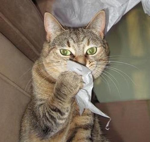 Кота ударили в нос