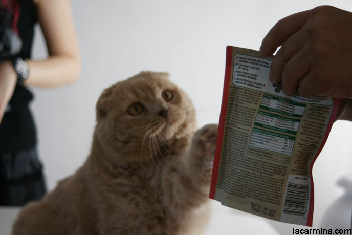 Лакомства для кошек: угощение не во вред