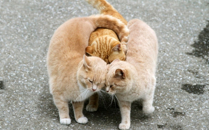 Мартовские кот звук