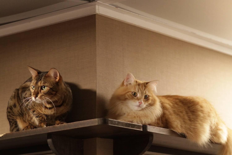 Кто чаще болеет коты или кошки