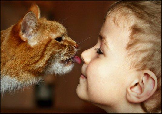 Хозяин и кот любовь