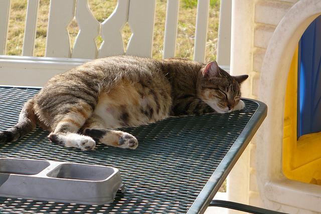 Почему кошка не ест землеройку - 41ed