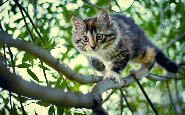 Виноват во всём кот