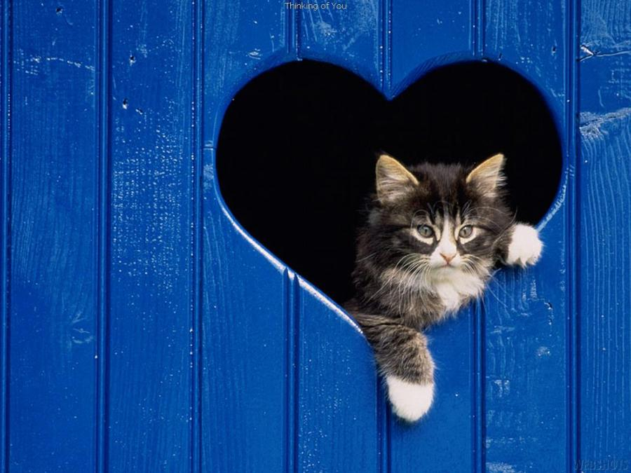 Болезни сердца у кошек