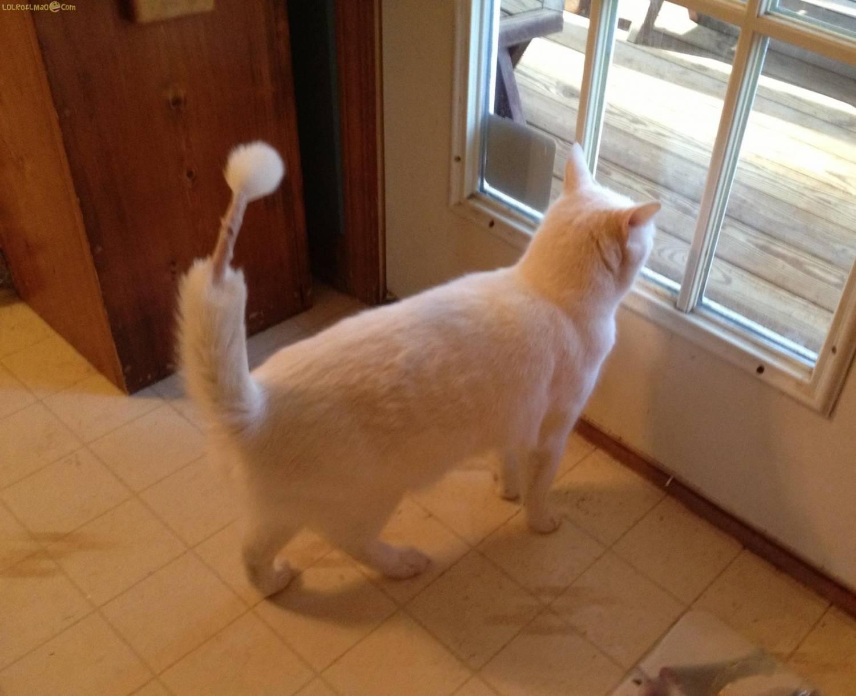 У кота распушен хвост