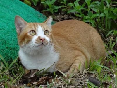 Инсульт у кошки причины симптомы и