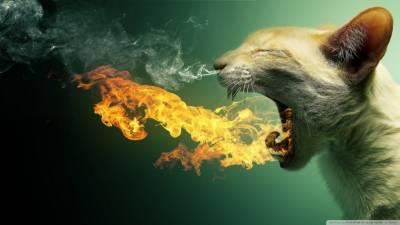 Дыхательная система кошки возможные
