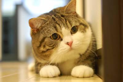 Почему кошка не ест землеройку - e8