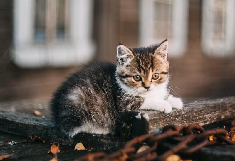 Профилактика для дома если глисты у кота