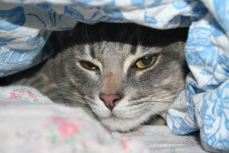 Как понять что кот отравился