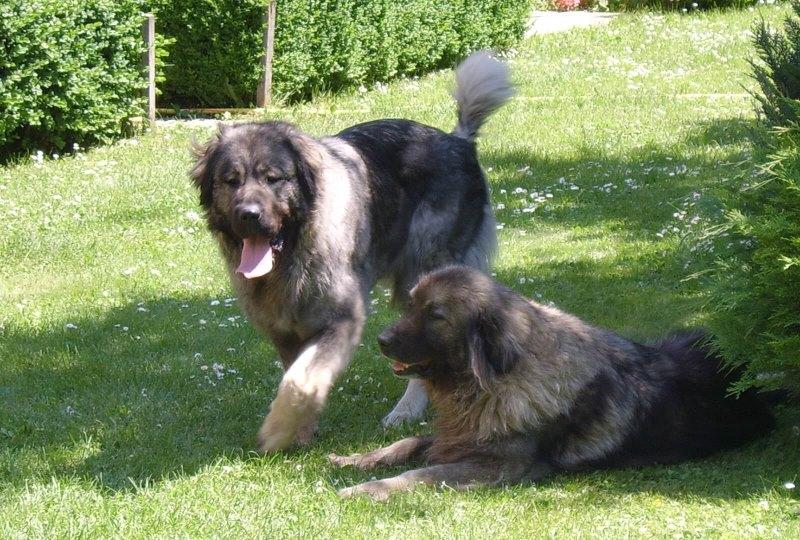 Отравление у собак симптомы помощь и лечение