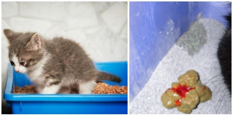 Понос у кошки причины и лечение в домашних условиях 710