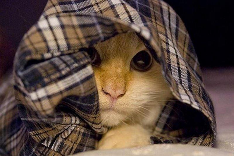Если кот прячется от света