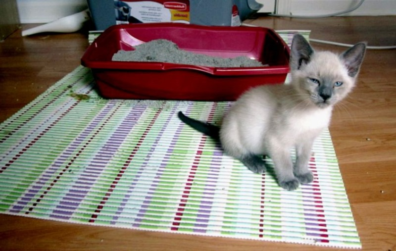 У кота сильный понос что делать
