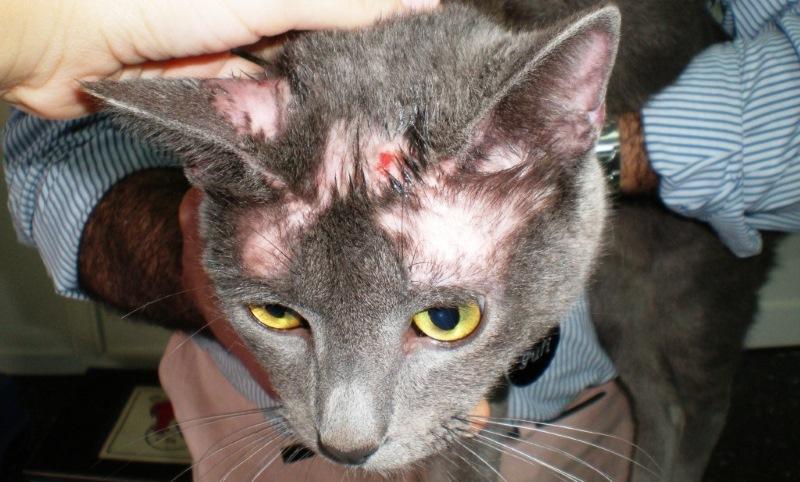 Порода кошек с буквой м на лбу фото название на голове