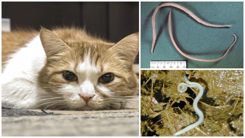 Кал кота с белыми червяками