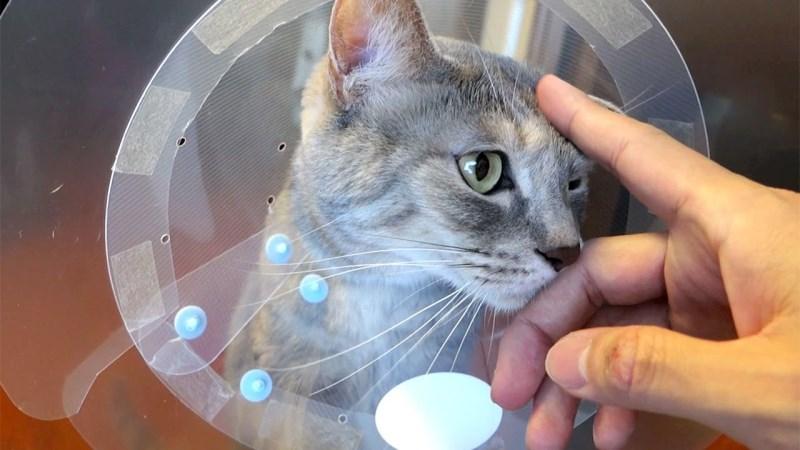 Как кастрировать кота своими руками