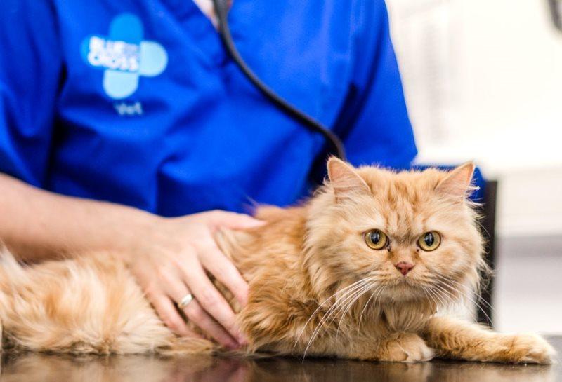Ветеринары кастрация кота