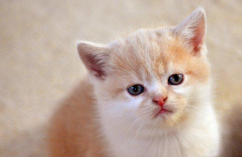аллергия у котенка чем лечить