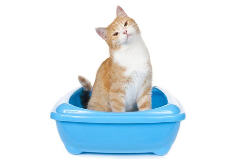 Питание кошки в домашних условиях 22
