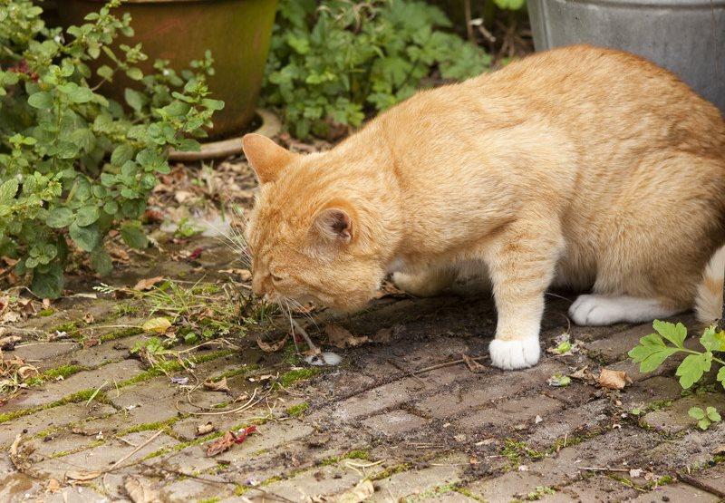 Анализ крови при пищевом отравлении кошек Прикрепление к поликлинике Деловой центр (МЦК)