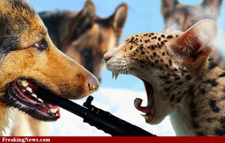 Dogs And Cats With Guns | www.imgkid.com - The Image Kid ...