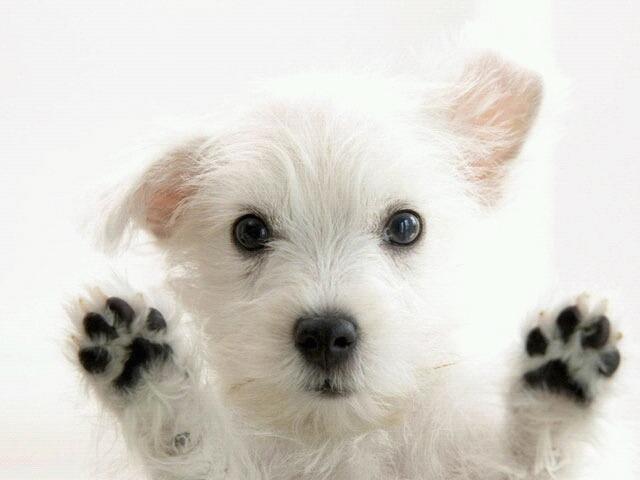 Кастрация собак: в каком возрасте и как подготовиться