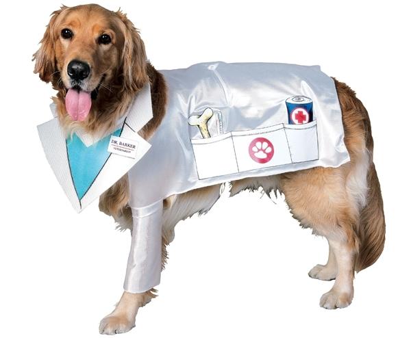 Стерилизация собак: виды, способы и методы