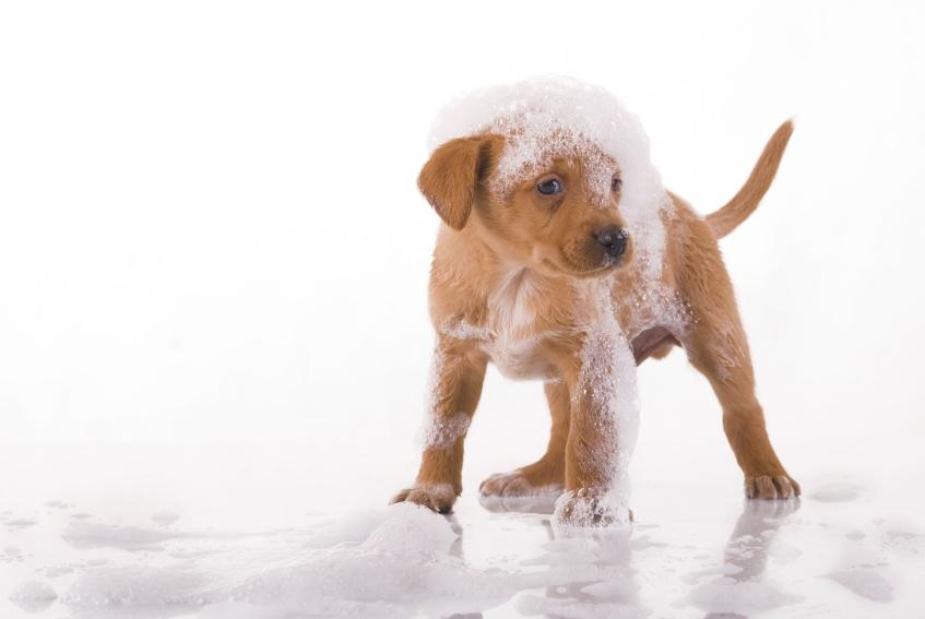 Выбираем профессиональный шампунь для собак