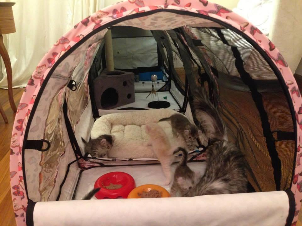 Как оборудовать место для родов кошки