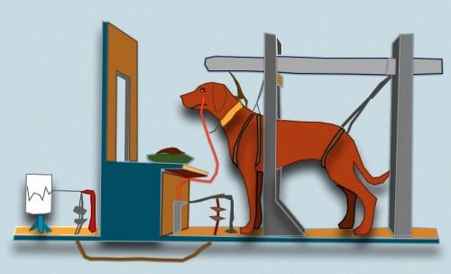 Опыты Павлова с собаками