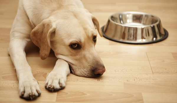 Диета для собак: как не навредить, пытаясь помочь?