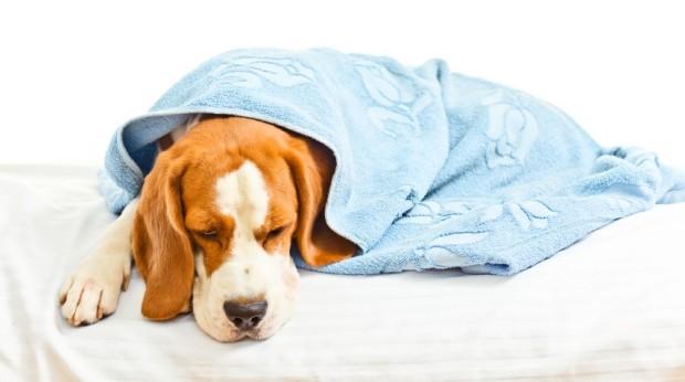 Canin Coronavirus менее