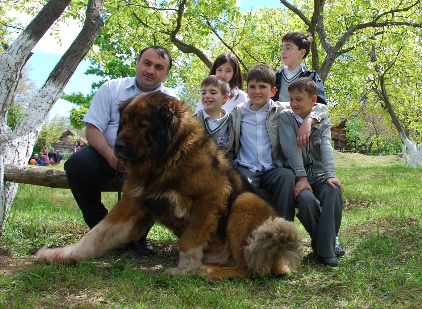 Кавказская овчарка: собака для ... Images - Frompo