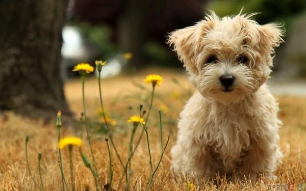 Возможные осложнения после стерилизации собак
