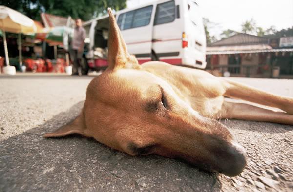 Как поступить, если собаку сбила машина?