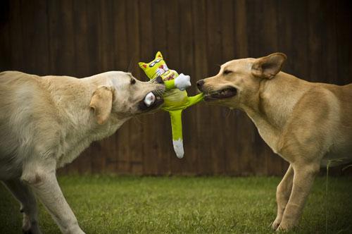 Кошки VS Собаки