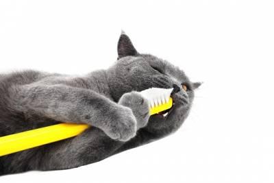 Стоматит у кошек симптомы лечение