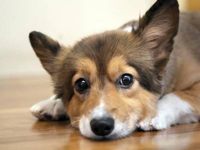 Стерилизация собак уход после операции