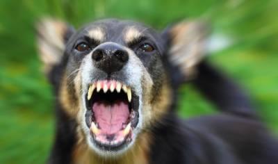 Укусила собака признаки бешенства
