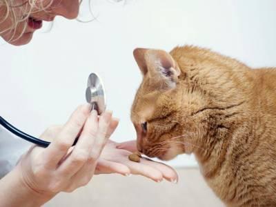 У кормящей кошки твердые молочные железы