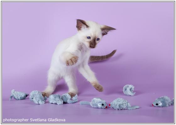 Фото как сделать игрушку для кошки своими