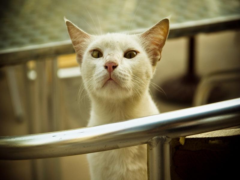Холодные уши и лапы у кота