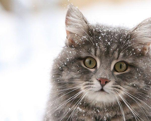 Кот живет зимой на улице