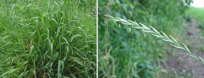 есть траву: