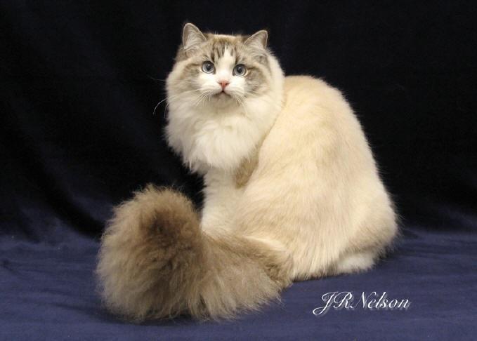 Кукла-кошка для кота