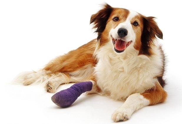 Перелом у собаки: виды, симптомы и лечение